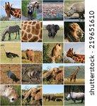 collage of wild animals in... | Shutterstock . vector #219651610