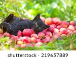 Stock photo cute little black kitten lying on back on red organic apples on green grass 219657889