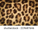 Detail  Skin  Of  Leopard ...