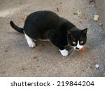 black and white big stray cat... | Shutterstock . vector #219844204