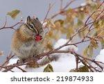 Christmas Holiday Wildlife A...