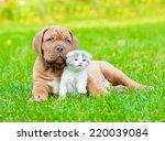 Stock photo bordeaux puppy dog with newborn kitten on green grass 220039084