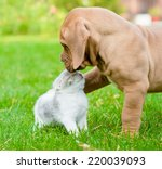 Bordeaux Puppy Dog Kisses Kitten