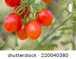 Red Grape Tomatoes Tomatoes...
