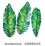 Tropical Leaves. Banana Palm...