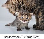 adorable little newborn kitten... | Shutterstock . vector #220053694