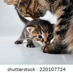 adorable little newborn kitten... | Shutterstock . vector #220107724