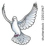 white dove vector | Shutterstock .eps vector #22011967