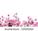 lovely red flowers against... | Shutterstock . vector #22026364