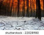 Sundown and snow  in a forest - stock photo