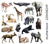 set of african animals on white ... | Shutterstock . vector #220438249