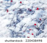 Red Berries And Snowy Branch