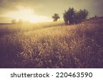 Vintage Photo Of Grain Fields