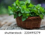 mint  in small basket on... | Shutterstock . vector #220495279