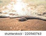 Vintage Waves Approaching Sea...