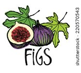 fruits and leaves figs design... | Shutterstock .eps vector #220570543