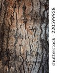 Texture Of A Tree Bark Close U...