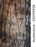 Texture Of A Tree Bark Close U...