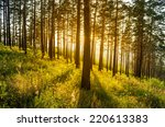 sunset behind the forest | Shutterstock . vector #220613383