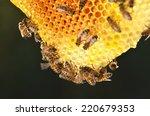 Hardworking Bees On Honeycomb...