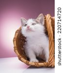 small kitten sitting in a... | Shutterstock . vector #220714720