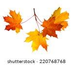 branch of autumn leaves ... | Shutterstock . vector #220768768