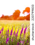view of a flowers field | Shutterstock . vector #220799833