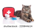 cat with first aid kit | Shutterstock . vector #220844614