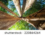 amazing sunny day at rainforest ... | Shutterstock . vector #220864264