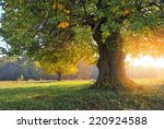 Autumn Landscape With Tree In...