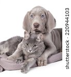 Stock photo dog and cat relaxing on white background 220944103