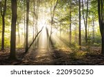 rays of light in forrest | Shutterstock . vector #220950250