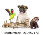 Stock photo large group of pets isolated on white background 220952173