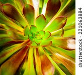 succulent plant background.... | Shutterstock . vector #221063884