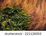 Abstract Forest Image
