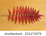 Autumn Background   Red Sumac...
