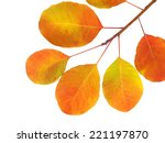 autumn branch with colorful... | Shutterstock . vector #221197870