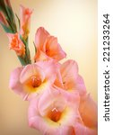 Gladiolus Branch With...