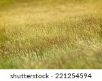 Long Grass Using Partial Focus.