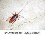 close up cockroach on the wall | Shutterstock . vector #221335804