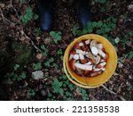 edible mushrooms  birch bolete  ... | Shutterstock . vector #221358538