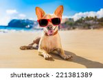 chihuahua dog at the ocean... | Shutterstock . vector #221381389