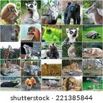 collage photos of some wild... | Shutterstock . vector #221385844