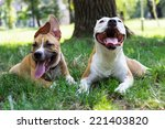 Portrait Of Two Happy Dogs In...