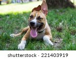 Stock photo happy puppy in the park 221403919