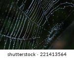 spider webs in nature | Shutterstock . vector #221413564