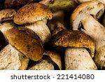 Porcini Mushrooms Close Up