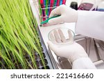 scientists research grains... | Shutterstock . vector #221416660