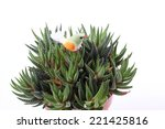 fake bird on agave plant in pot | Shutterstock . vector #221425816