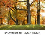 beautiful autumn forest | Shutterstock . vector #221448334